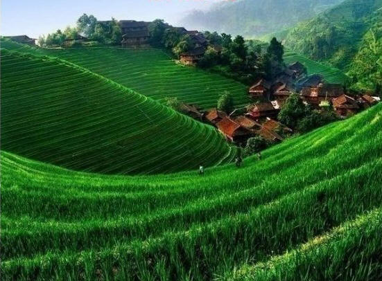 a20glimps20of20paddy20field20a20major20food20crop20of20nepal1.jpg