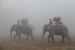 elephants-300x199